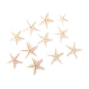 Dekorační hvězdice